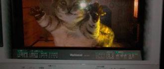 Что будет, если засунуть кошку в микроволновку